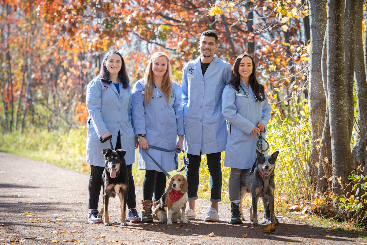 four veterinary medicine students on the confederation trail