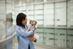 veterinarian holding a small white dog